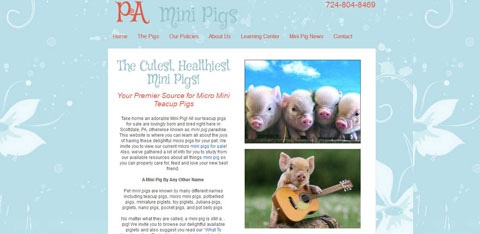client PA Mini Pigs home page screen shot